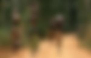 Envíos baratos a Burundi