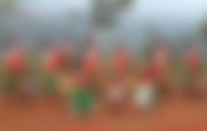 Envíos Express a Burundi