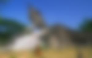 Envíos Express a Laos