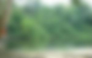 Envios urgentes para Surinam
